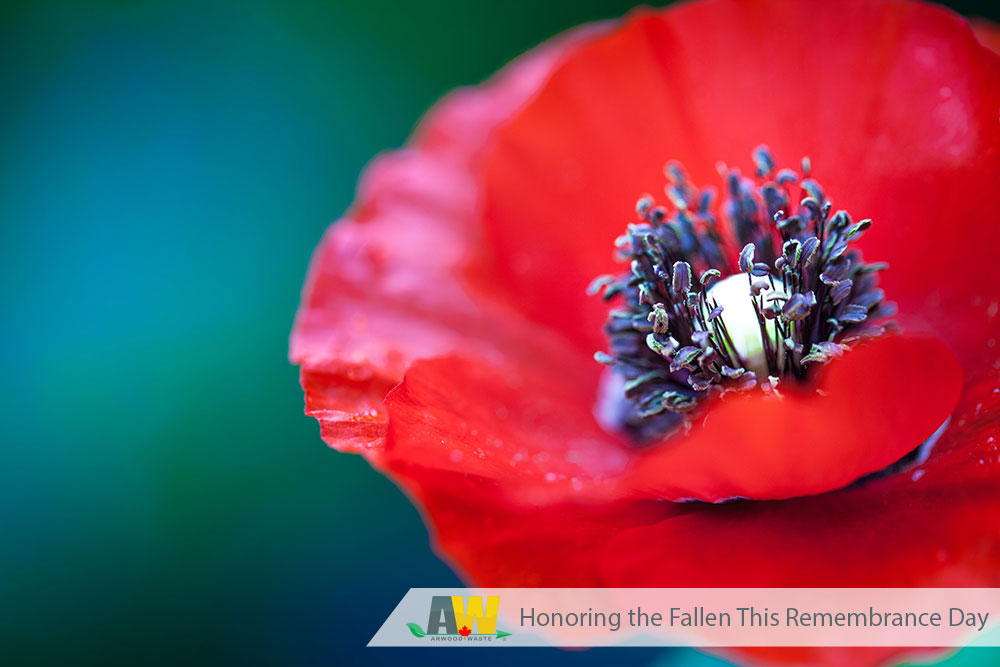 Honoring the Fallen This Remembrance Day | Arwood Waste